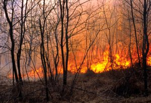 Wildfire Season is Officially Here: It Predicted to be As Bad As Last Year